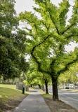 街道标示用绿色生叶的树 免版税库存照片
