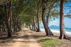 街道海边和杉木在海滩附近 库存照片