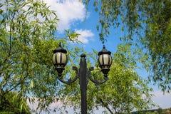 街道照明波兰人和柳树 免版税图库摄影