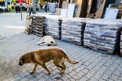 街道狗在一个小海边镇 库存图片