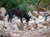 街道狗废堆 免版税库存照片