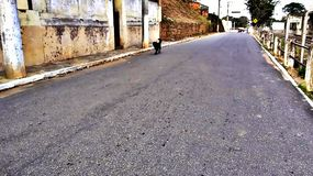 街道狗 图库摄影