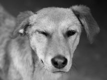 街道狗 免版税库存图片