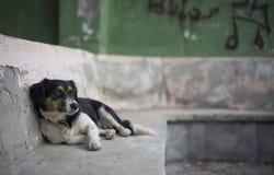 街道狗Kas,土耳其 库存照片
