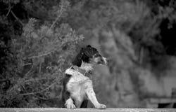 街道狗Kas,土耳其 图库摄影