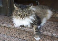 街道猫在伊斯坦布尔 免版税库存图片