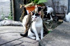 街道猫在大镇 免版税图库摄影
