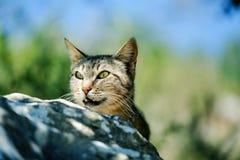 街道猫在葡萄牙 库存图片