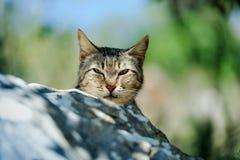 街道猫在葡萄牙 免版税库存照片