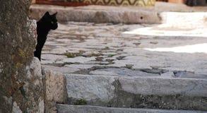 街道猫在Bakar 免版税库存照片