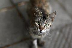 街道猫 小组街道猫 免版税库存照片