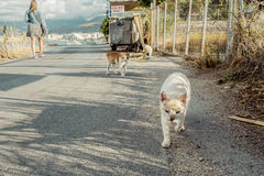 街道猫画象在克利特希腊 免版税库存照片