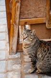街道猫 库存照片