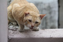 街道猫 免版税库存照片