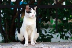 街道猫 图库摄影