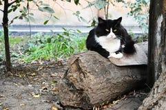 街道猫 库存图片