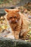 街道猫 免版税图库摄影