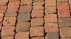 街道砖 免版税库存照片