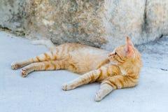 街道红色猫休息 免版税库存图片