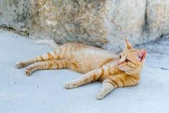 街道红色猫休息 库存图片
