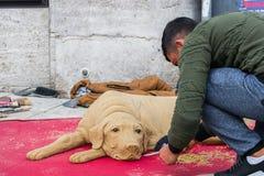 街道艺术家在步行区域塑造与沙子的一条狗在雷根斯堡,德国 免版税库存图片