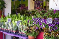 街道花市场在特拉维夫,以色列2017年4月20日 库存图片