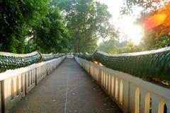 街道走廊墙壁绿色篱芭 太阳发光 免版税库存图片