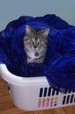 洗衣店猫 免版税库存图片