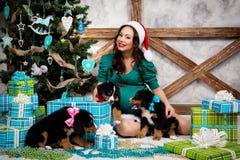 衣服的孕妇与在圣诞树附近的一条画报狗 免版税图库摄影