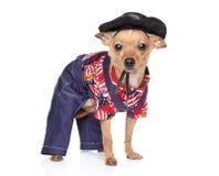 衣物方式墨西哥狗玩具 免版税图库摄影