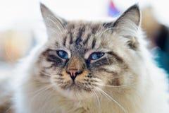 衣衫褴褛的儿童猫 免版税库存图片