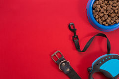 衣领、蓝色碗用饲料,皮带和纤巧狗的 查出在红色背景 库存图片