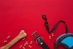 衣领、蓝色碗用饲料,皮带和纤巧狗的 查出在红色背景 库存照片