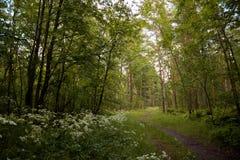 补丁在森林里 免版税库存照片
