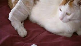 补救和受伤的猫 影视素材
