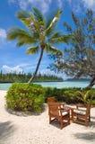 表和椅子在一棵棕榈树下在一个热带海滩, Ile des别针 免版税库存图片