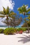 表和椅子在一棵棕榈树下在一个热带海滩, Ile des别针 库存图片