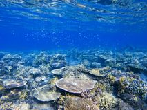表珊瑚 异乎寻常的海岛岸浅水区 热带海滨风景水下的照片 免版税库存照片
