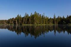 水表面上完全反射的绿色森林 免版税图库摄影