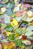 水表面上的下落的叶子 免版税库存照片