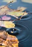 水表面上的圆环 免版税库存照片