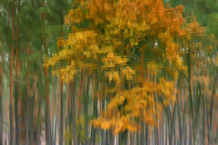 水表面上的秋天题材  免版税库存图片