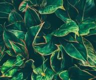 表面上的绿色叶子树样式 库存照片