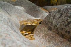 水表面上的黄色枫叶在岩石中 库存图片