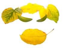 表面叶子 免版税库存照片