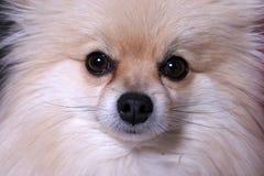 表面小狗 免版税图库摄影