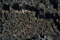 表面岩石石灰石、灰色石灰石和背景在泰国 库存图片