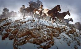表面岩石赛跑者 免版税图库摄影