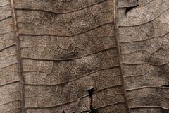 表面干燥棕色叶子纹理 图库摄影