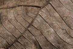 表面干燥棕色叶子纹理 免版税库存照片